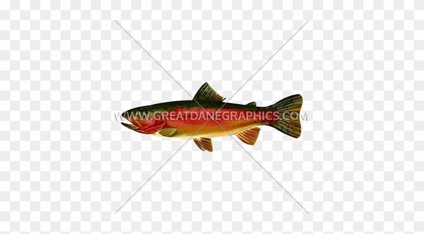 Rainbow Trout Side - Coastal Cutthroat Trout #1026795