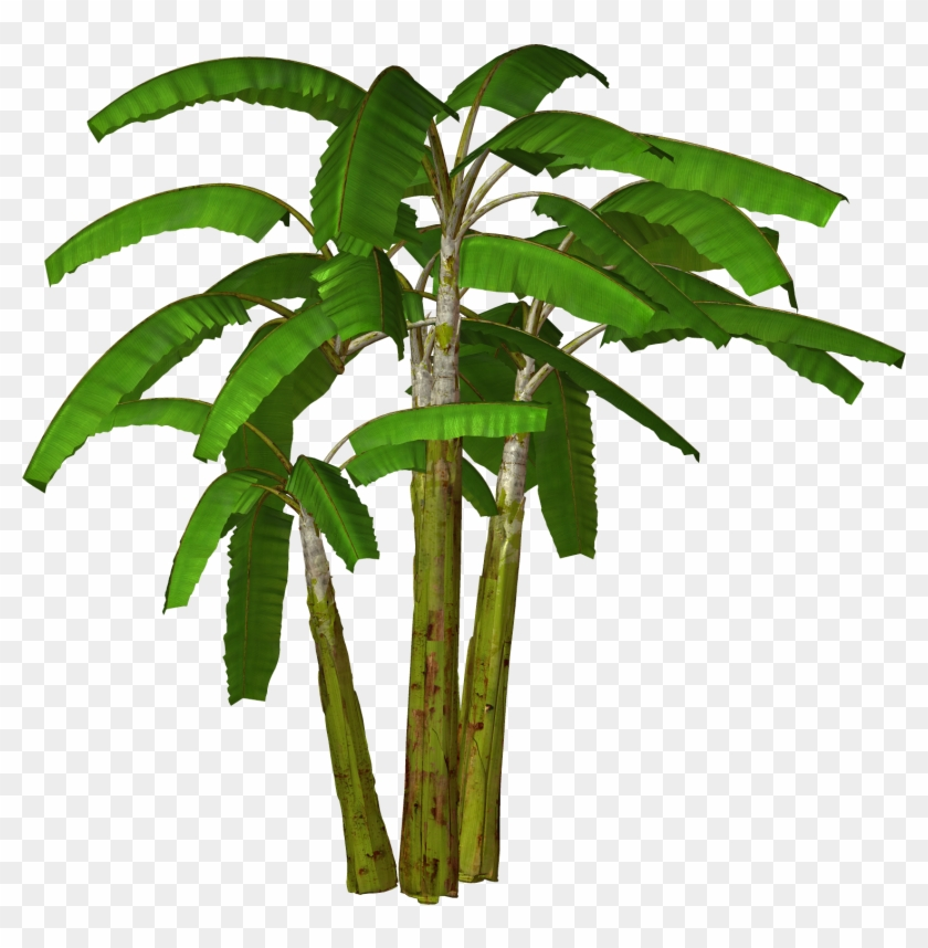 Free High Resolution Graphics And Clip Art Banana Tree Images In