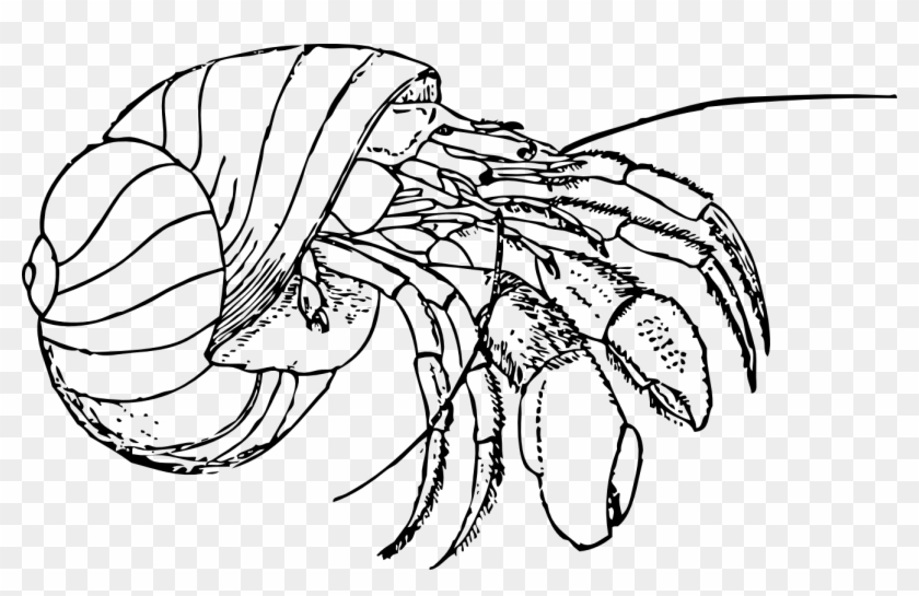 Crab Clipart Drawn Hermit Crab Coloring Pages Free Transparent