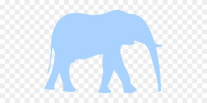 Elephant, Animal, Huge, Mammal, Walking - African Rainforst Elephants Are Blue #182205