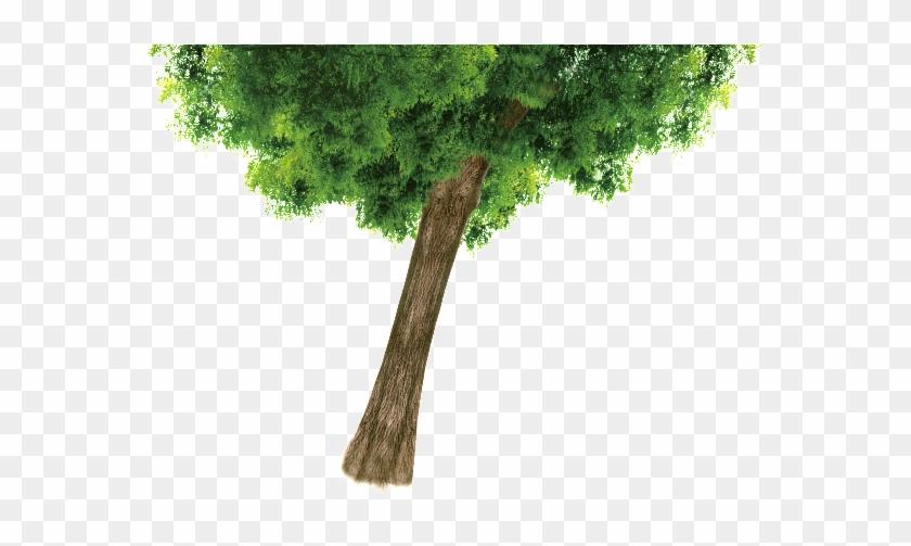 Download 78 Background Verde Paling Keren