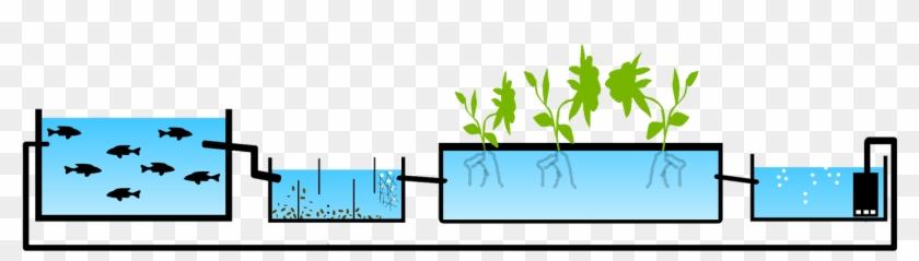 Starter Plants Take - Aquaponic Greenhouse Design #1029637