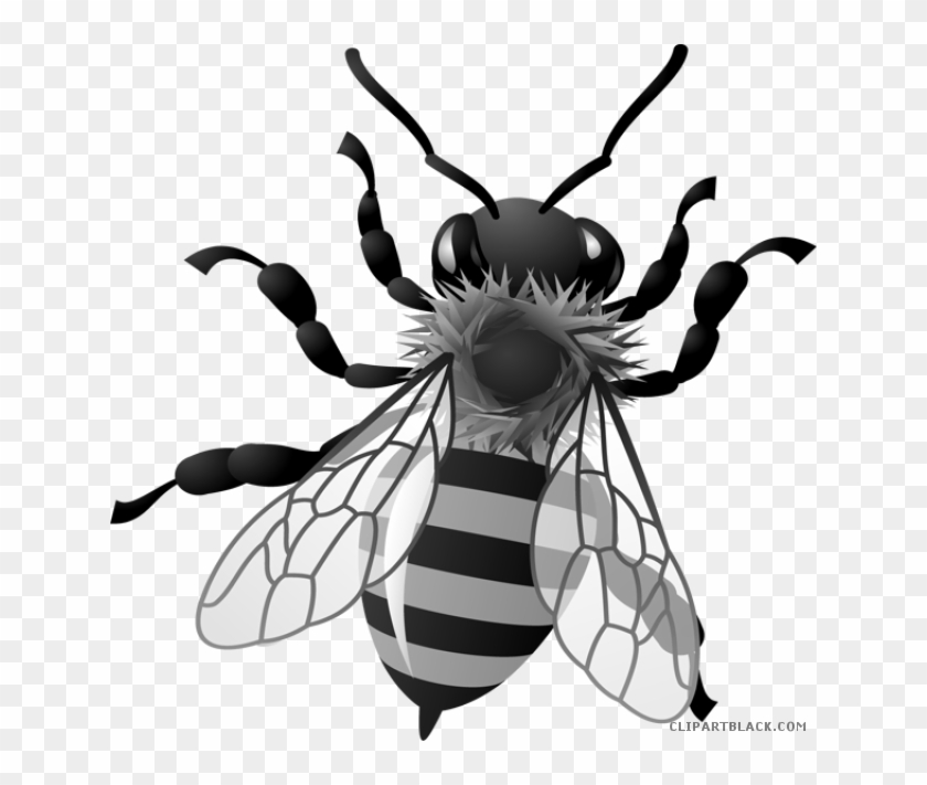 Honey Bee Animal Free Black White Clipart Images Clipartblack Honey Bee Clipart Free Transparent Png Clipart Images Download