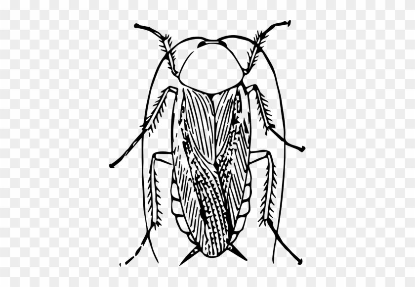 Cockroach Drawing Public Domain Vectors - Cockroach Black And White Png #1033497