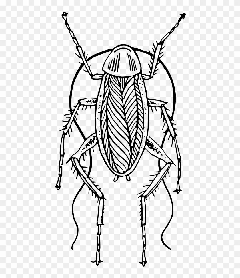 This Image Rendered As Png In Other Widths - Cockroach Black And White #1033505