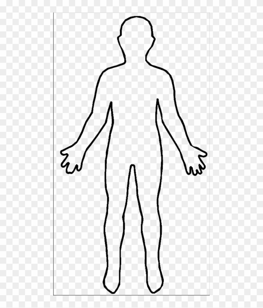 anatomy outline
