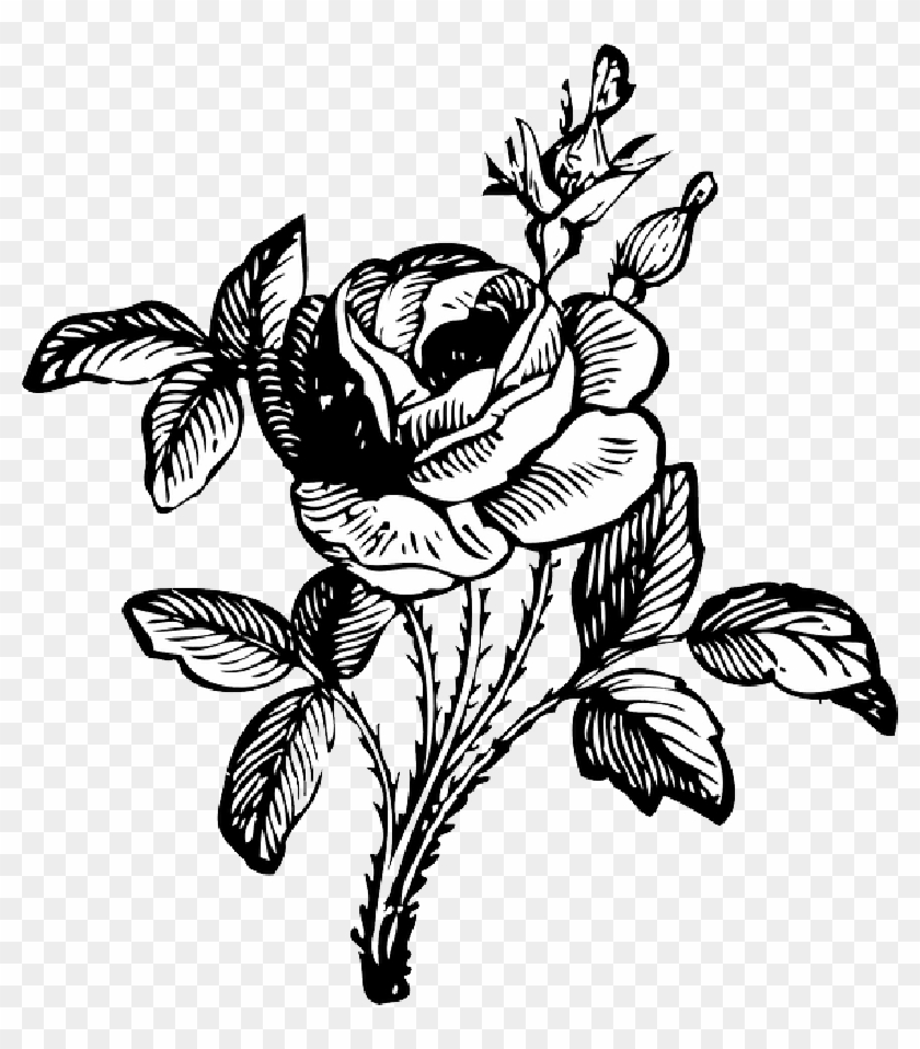 Black Drawing Leaf White Rose Free Vine Vines Black And