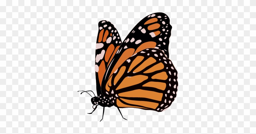 Monarch Butterfly Clipart 23, Buy Clip Art - Life Cycle Of A Butterfly #1050535