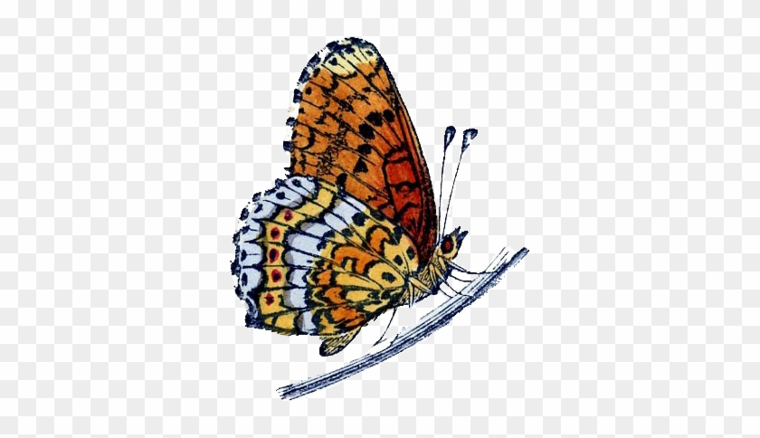 Start To Grow - Butterfly And Caterpillar Clip Art #1054014