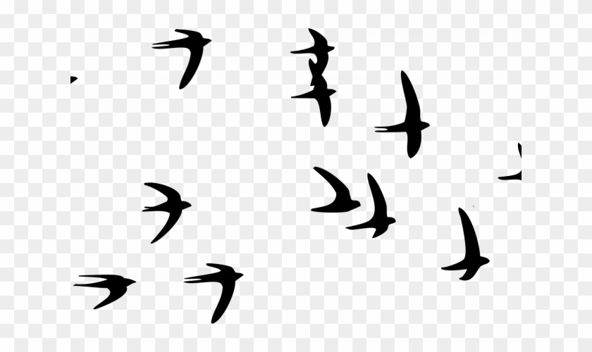 Flying Bird Png Image - Transparent Flying Bird Png - Free