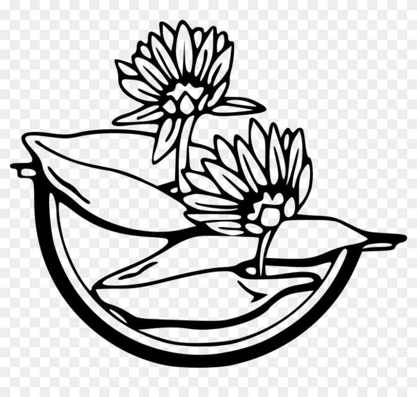 Water Black And White Free Vector Graphic Flowers Black Water Lily