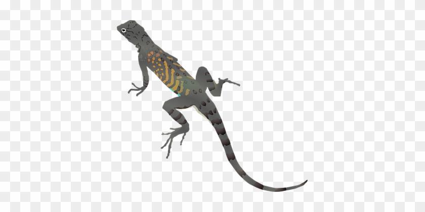 Lizard Gecko Dragon Animal Cartoon Reptile - Desert Lizard Clipart #1064675