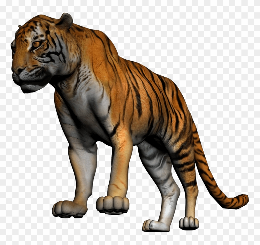 Tiger Whole Body #1068423