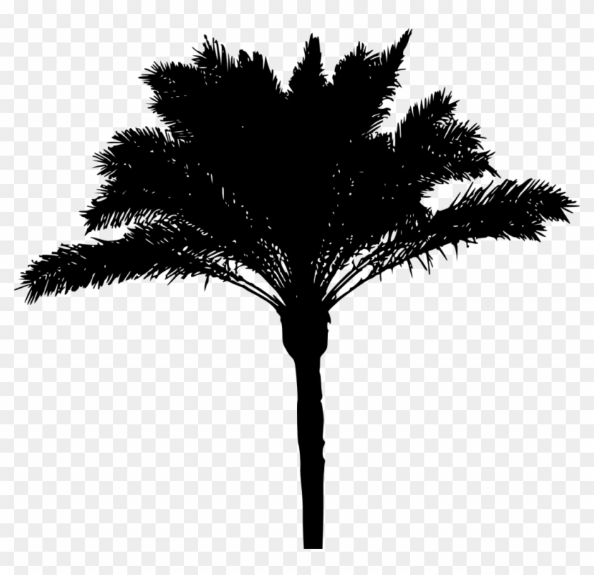 1223 × 1500 Px - Palm Tree Png Transparent #1072998