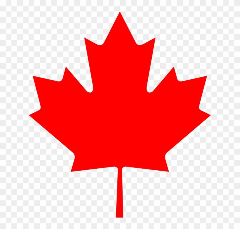Leaf Clipart Canadian - Canada Flag Maple Leaf #1082993