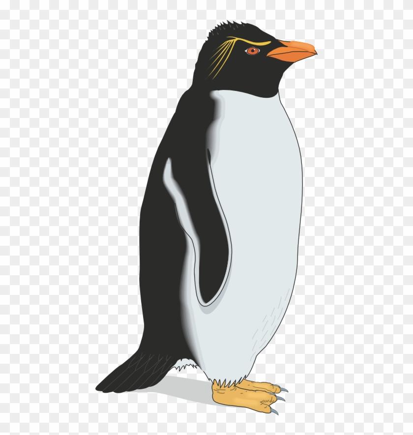 Pinguino gioco gratis