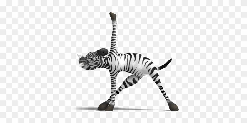 Zebra Yoga Free Transparent Png Clipart Images Download