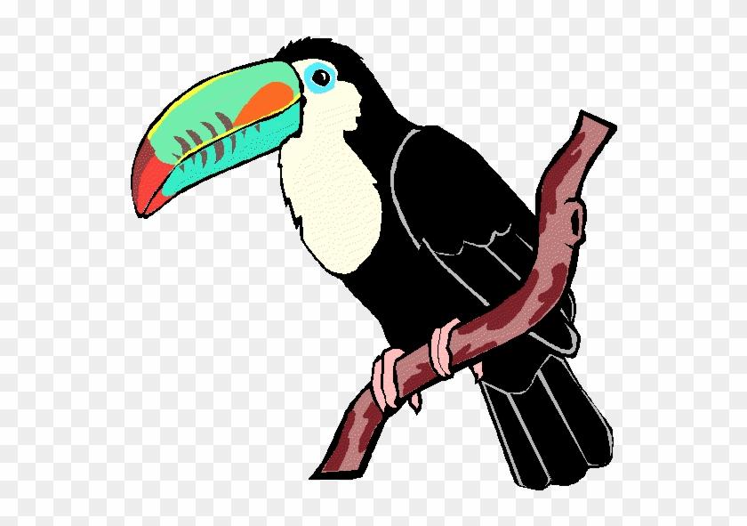 Toucan Clipart Rainforest Animal - Animal From Rainforest Clip Art #1098921
