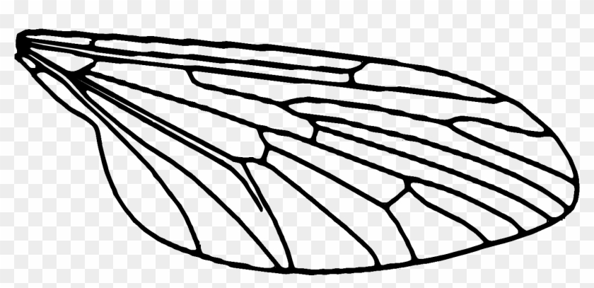 Each Wing Is Printed In 3 Pieces, A White Wing Sandwiched - Fly Wings Drawing #1099076