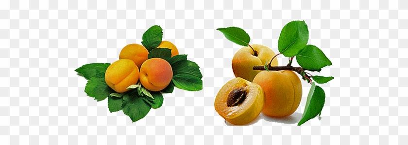Apricot Fruit Benefits #1122337