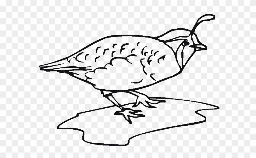 Index Of Wp Content Uploads 2014 Coloring Page Quail Free