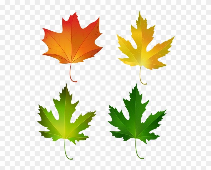 Fall Maple Leaves Set Png Decorative Clipart Image - Sugar Maple Leaf Color #1127198