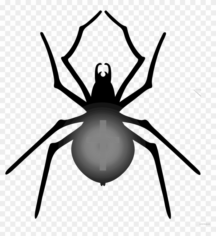 Halloween Spider Animal Free Black White Clipart Images