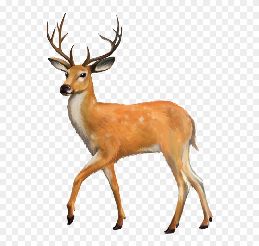 White-tailed Deer Red Deer Clip Art - Animals With Four Legs #190637