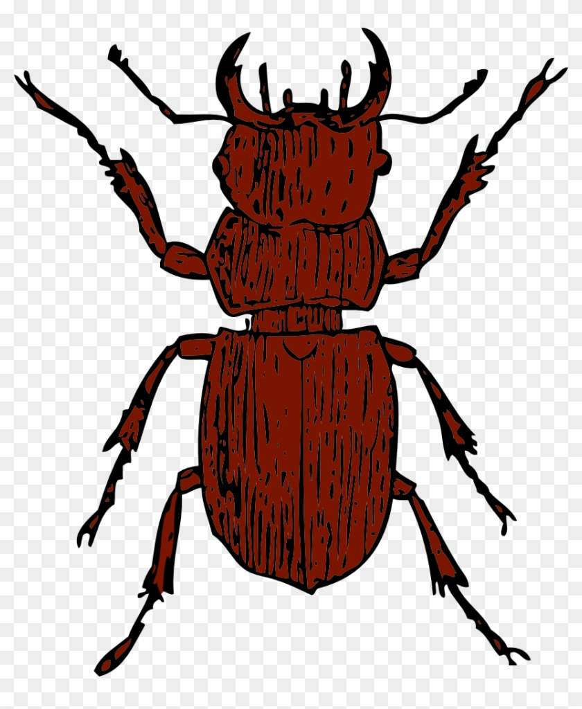 Stag Beetle Clipart #191003
