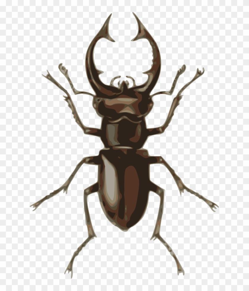Medium Image - Stag Beetle Clipart #191068