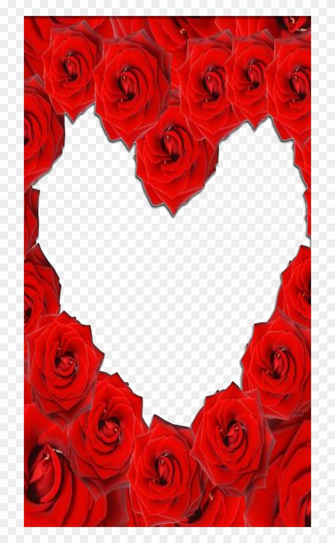 Red Rose Love Frame - Rose Love Frame - Free Transparent PNG Clipart ...