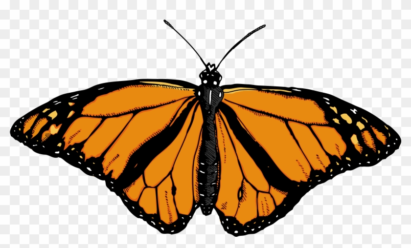 Light Orange Butterfly Clip Art At Clker - Butterfly Png #1153811