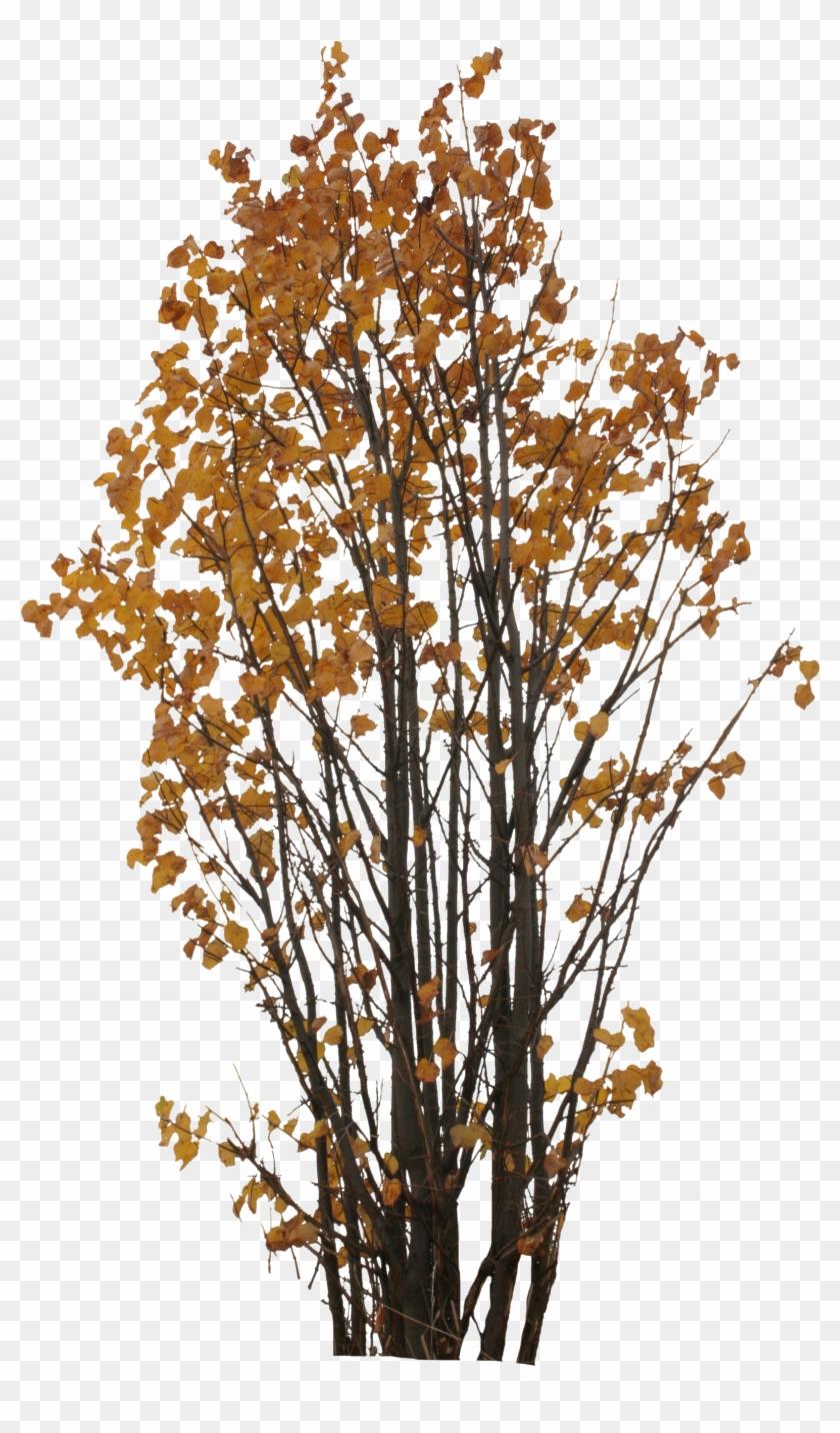 2d Trees, Autumn - Autumn Tree Png #1157227