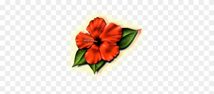 Lovely Plumeria Photos Hawaii State Flower Images Clipart Hibiscus