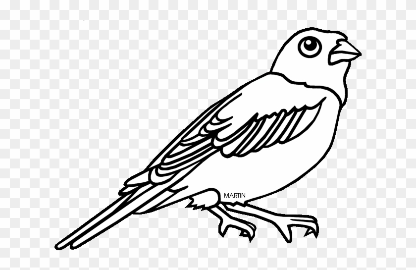 Colorado State Bird Coloring Page 6 By Kari Coloring Book Free Transparent Png Clipart Images Download