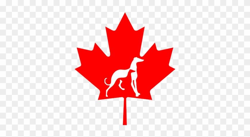 Canada Flag Maple Leaf #1165660