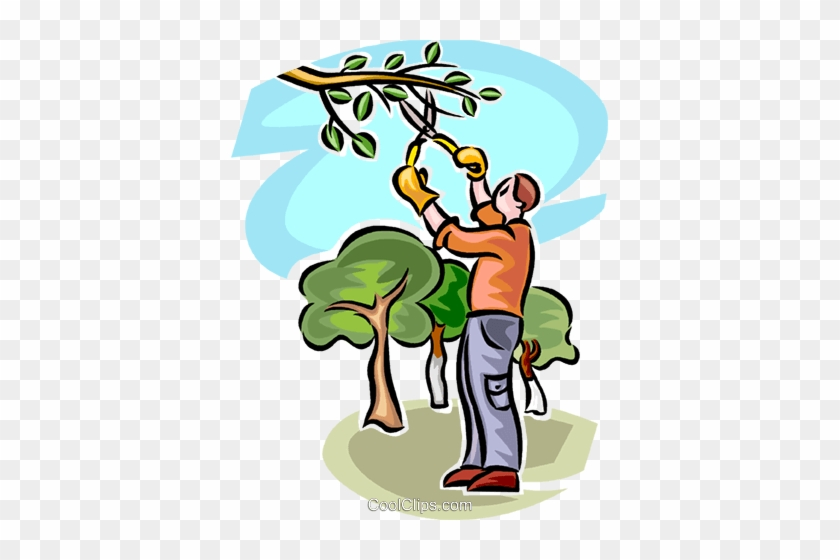 Tree Service Clip Art - Tree Trimming Clip Art #1168788