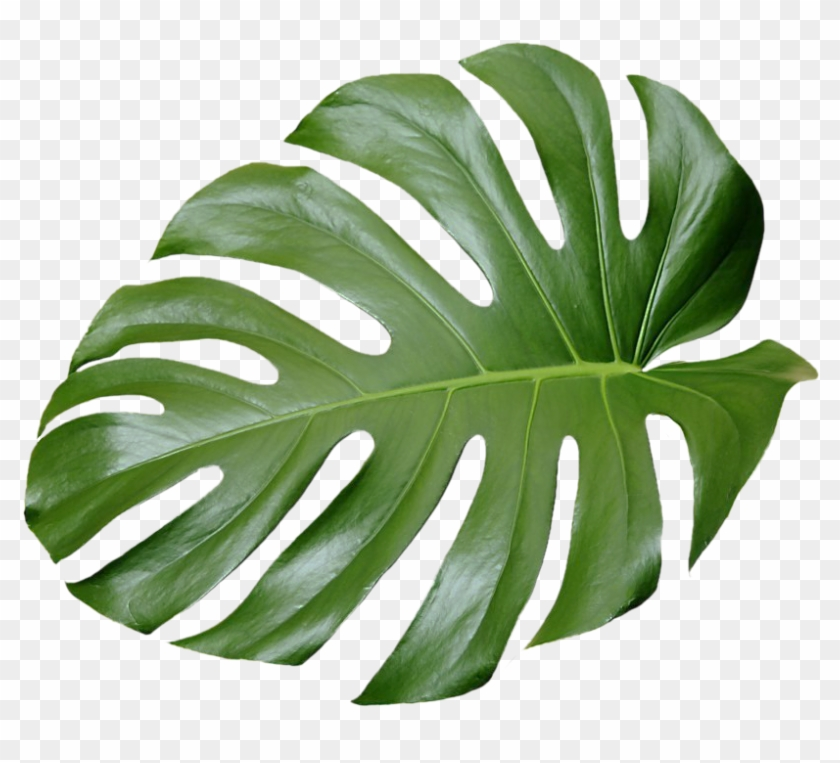 Tropical Leaf Plant Aesthetic Ftestickers Freetoedit - Tropical Leaves #1172544