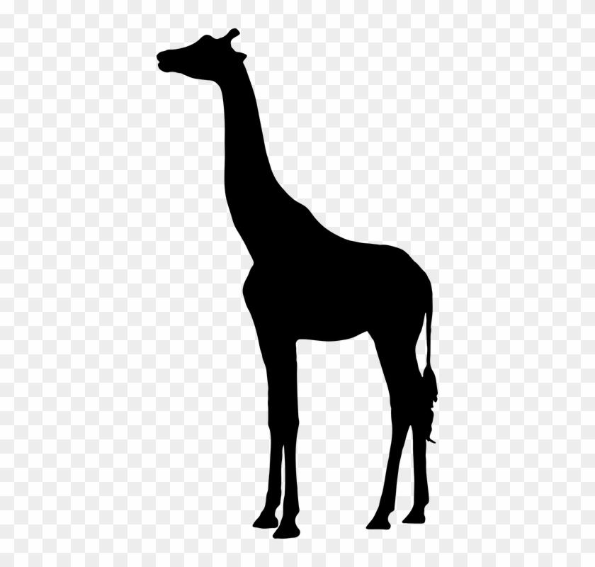 Giraffe, Landscape, Animal, Mammal, Africa, Tall, Neck - Giraffe Silhouette #1175525
