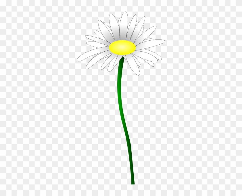 Daisy Flower Png - Classycloud co