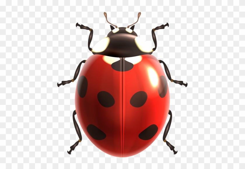 Insects Illustrations Vector - Ladybird Illustration #194866