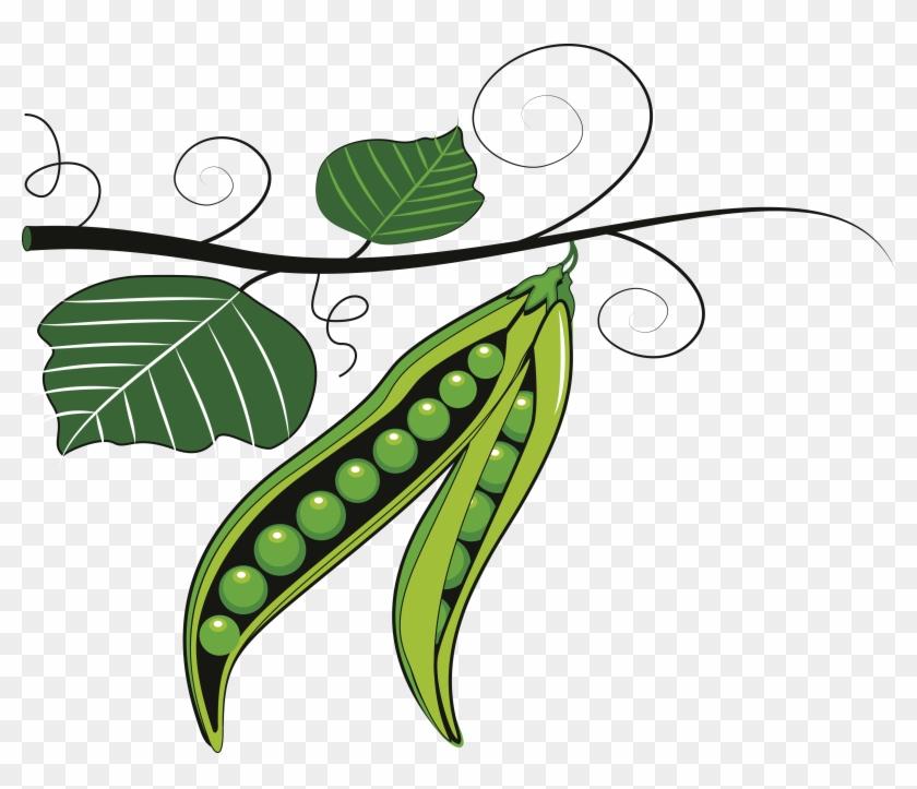 Fruit Pea Pulse Clip Art - Clip Art Of Green Vegetable #195567