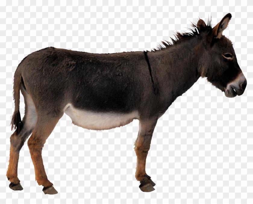 Donkey Png - Donkey Transparent #196192