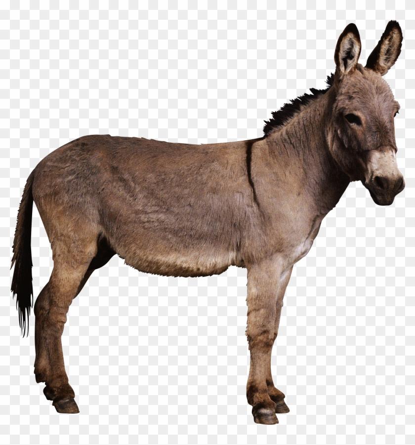 Donkey Png - Ennai Paar Yogam Varum #196309