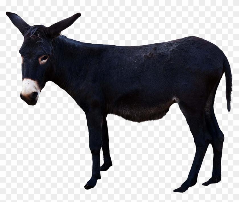 Donkey Png - Donkey With Transparent Background #196318
