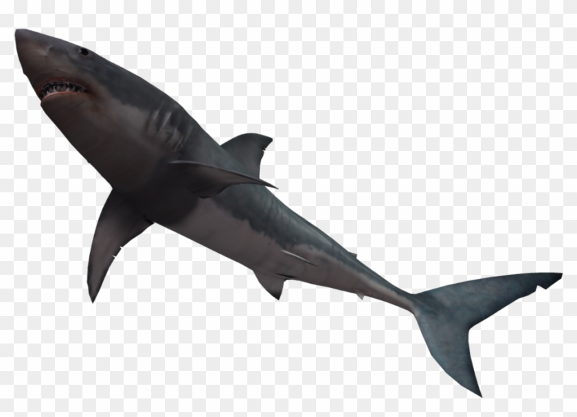 Shark Black And White Great White Shark By Wolverine - Shark With No Background #196638