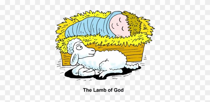 Lamb And Baby