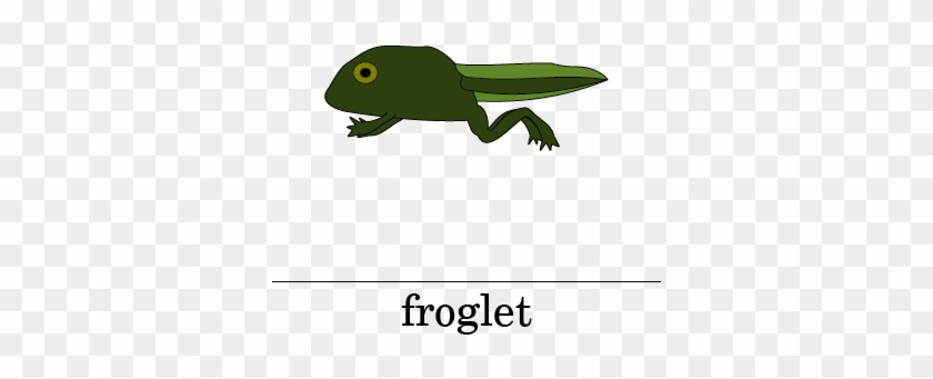 Picture - Life Cycle Of A Frog Froglet #1188401