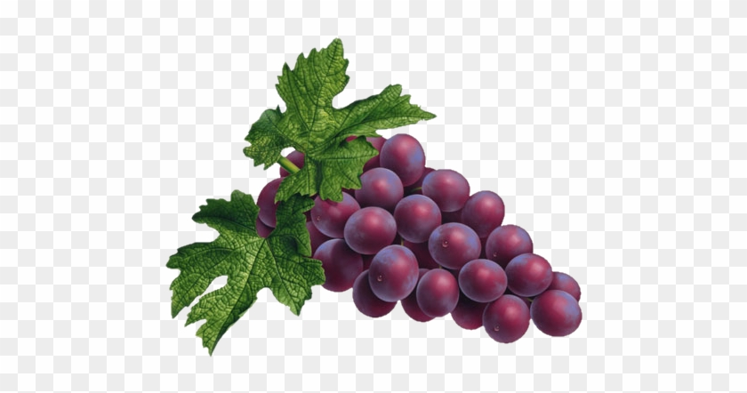Grape Png Transparent Images Grapes Png Free Transparent