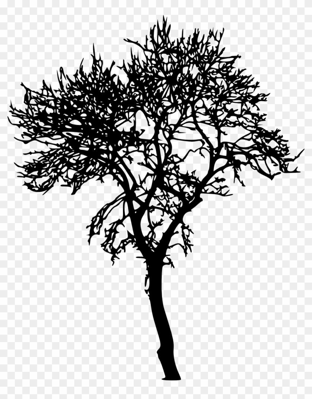 18 Bare Tree Silhouette Png Transparent Vol 2 Onlygfxcom Dessin Arbre Sans Feuille Peuplier Free Transparent Png Clipart Images Download